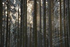 Sonnenlichtspiel Stockfotografie