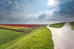 Sonnenschein über niederländischem Ackerland mit Tulpenfeld Stockbilder