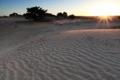 Sonnenschein über Sanddüne stockbild