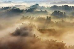 Sonnenschein auf dem Morgennebel mit Bambus und Hügel stockfoto