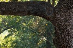 Sonnenschein auf spiderweb Stockbild