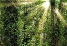 Sonnenschein durch Bäume im Regenwald lizenzfreies stockfoto