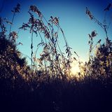 Sonnenschein durch das Heu Stockfotos