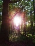 Sonnenschein durch den Wald Stockfotos