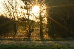 Sonnenschein durch die Bäume Stockbilder
