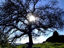 Sonnenschein durch einen Eichenbaum Stockfotos