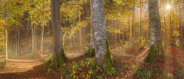 Sonnenschein durch Herbstwald Stockfotos