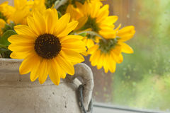 Sonnenschein an einem regnerischen Tag Stockbild