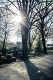 Sonnenschein hinter Baum Stockfotos