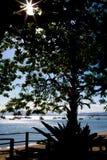 Sonnenschein hinter dem Baum Stockfotografie