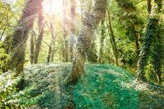 Sonnenschein im grünen Wald Lizenzfreies Stockfoto