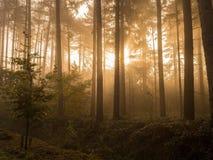 Sonnenschein im Holz Lizenzfreies Stockfoto