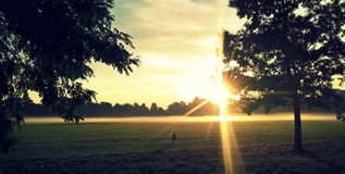 Sonnenschein im Park Stockfotos