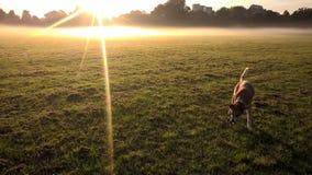 Sonnenschein im Park Lizenzfreies Stockbild