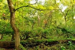Sonnenschein im Wald Stockbilder