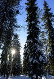 Sonnenschein im Wald-Lapplandfinnland stockbilder