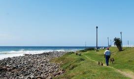 Sonnenschein-Küstenozean und -leute mit Hunden lizenzfreie stockfotografie