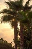 Sonnenschein macht die Weise durch Palme t Lizenzfreie Stockfotos