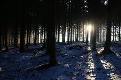 Sonnenschein nach Schneefällen Lizenzfreie Stockfotografie