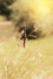 Sonnenschein am Stroh Stockfoto