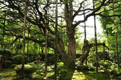 Sonnenschein und Bäume Lizenzfreies Stockfoto