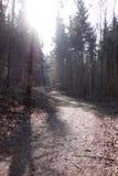Sonnenschein und Sonnenstrahlen Waldweg Stockfoto
