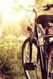 Sonnenschein und stehendes Fahrrad an der Natur Stockbild