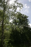 Sonnenscheinbäume lizenzfreie stockbilder