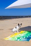 Sonnenschirm und Hund auf dem Strand von Ostsee Lizenzfreie Stockfotografie
