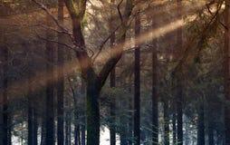 Sonnenstrahl in autumb Wald Stockfotografie