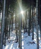 Sonnenstrahl in den Bergen machte einen magischen Wald Stockbilder