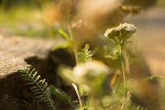 Sonnenstrahl-grüne Farbsommer-Gras Stockbilder
