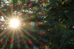 Sonnenstrahl im grünen Laub stockfotos