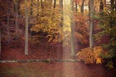 Sonnenstrahlabflussrinnenbäume im Park Lizenzfreie Stockbilder