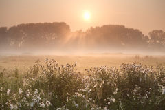 Sonnenstrahlen über nebelhafter Wiese Lizenzfreie Stockbilder