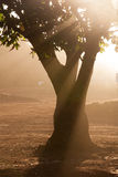 Sonnenstrahlen lizenzfreies stockfoto