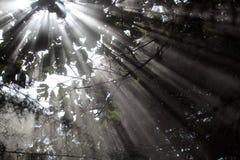 Sonnenstrahlen Lizenzfreie Stockfotografie