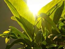 Sonnenstrahlen auf Blättern Lizenzfreies Stockfoto