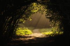 Sonnenstrahlen des frühen Morgens Stockbild