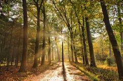 Sonnenstrahlen des Lichtes im Herbstwald mit Weg und in den Bäumen mit bunten Blättern Lizenzfreies Stockbild