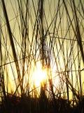 Sonnenstrahlen, die Abflussrinnengras glänzen Stockbilder