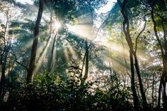 Sonnenstrahlen, die durch Bäume überschreiten Lizenzfreie Stockbilder