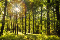 Sonnenstrahlen, die durch grüne Blätter von Bäumen glänzen Lizenzfreie Stockbilder