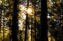 Sonnenstrahlen, die Mystiker durch Bäume des Waldes glänzen lizenzfreie stockfotografie
