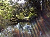 Sonnenstrahlen durch Bäume Stockbilder