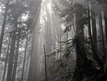 Sonnenstrahlen durch Bäume Lizenzfreie Stockfotos