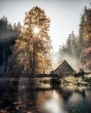 Sonnenstrahlen durch Baum im Dunst Stockfoto