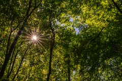 Sonnenstrahlen durch grüne Treetops, Velbert Lizenzfreie Stockfotos