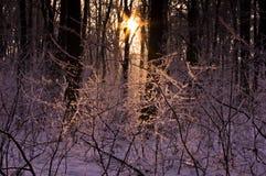 Sonnenstrahlen durch Schnee und Niederlassungen in einem Wald Stockfotos