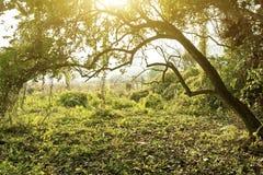 Sonnenstrahlen gießen in den Herbstwald. lizenzfreie stockbilder